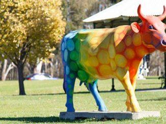 Shepparton Rainbow Cow